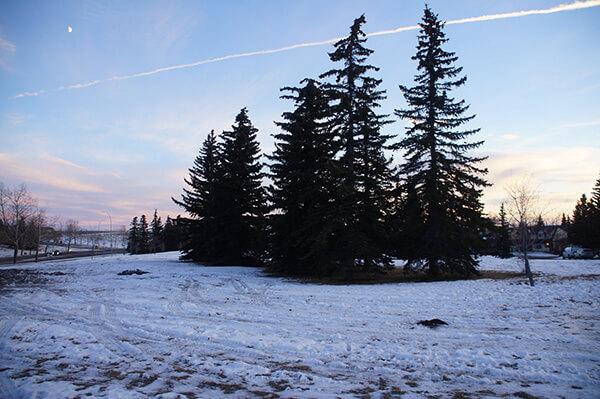 加拿大打工度假之卡加利屋外風景日常。