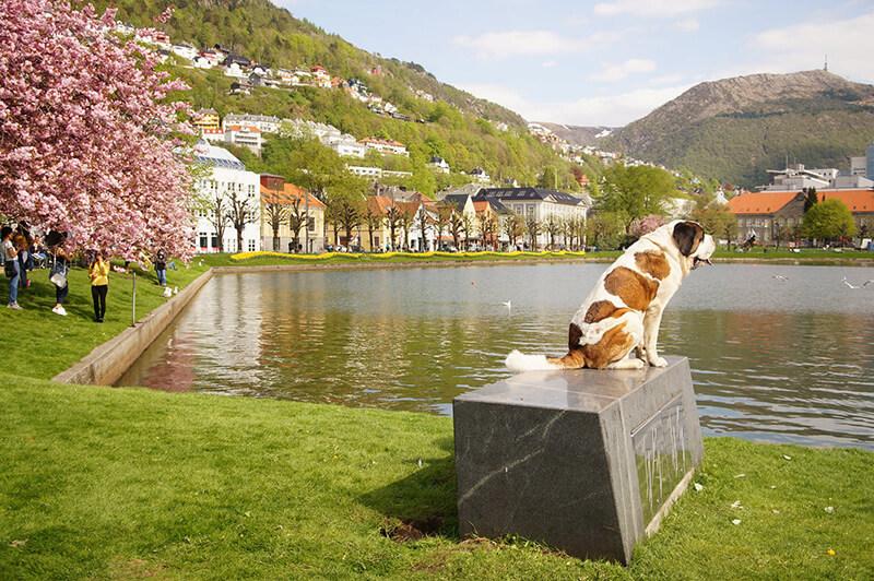卑爾根櫻花盛開的湖畔,LilleLungegårdsvannet 麗莉·倫格伽斯旺湖,狗狗,櫻花樹,小房子