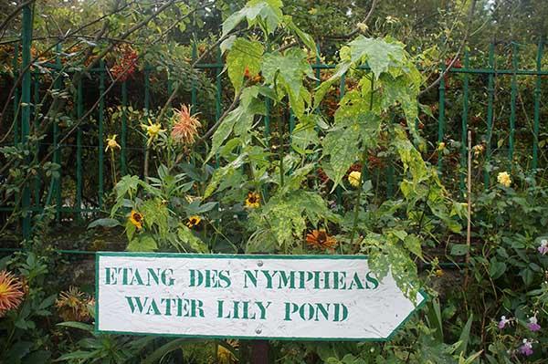 莫內花園 睡蓮池 指標