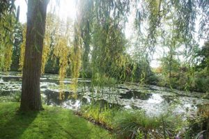 莫內花園睡蓮池
