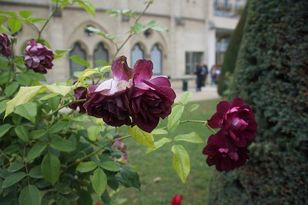 羅丹美術館 花園玫瑰