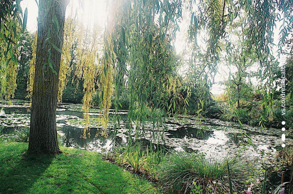 莫內花園 蓮花池畔 莫內睡蓮池