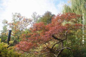巴黎莫內花園秋天