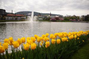 卑爾根美麗的人工湖畔與盛開的花季