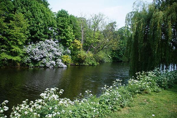 對岸的花園楊柳非常美麗!野餐好地方。