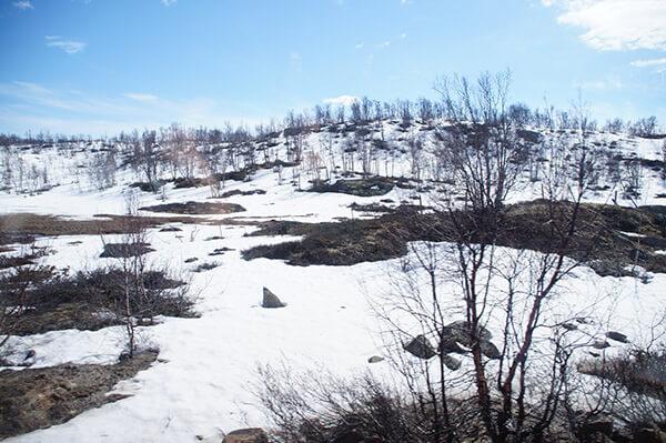 讓人驚嘆的沿途風景。白色的挪威森林。