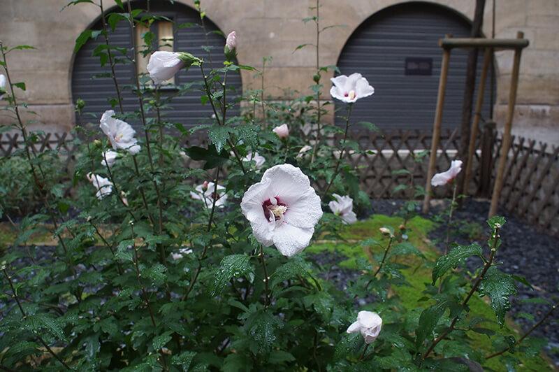巴黎古監獄,中庭放風處,美麗的花朵。