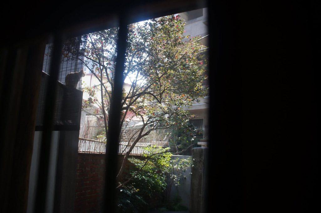 台南錫鼓 後方窗間看見貓