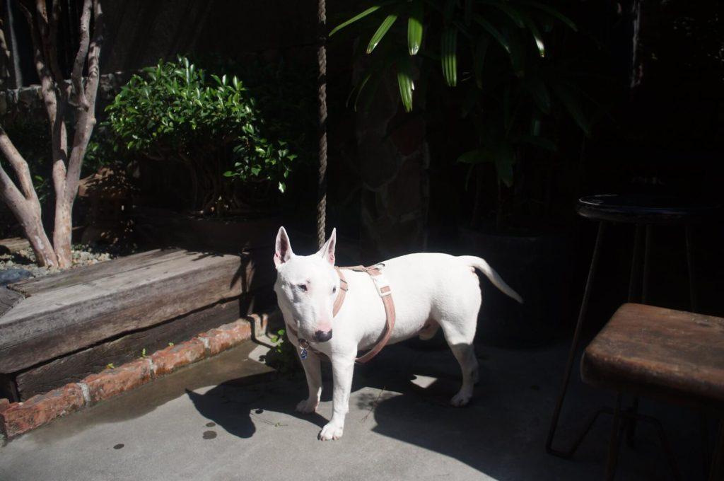 錫鼓可愛的店狗