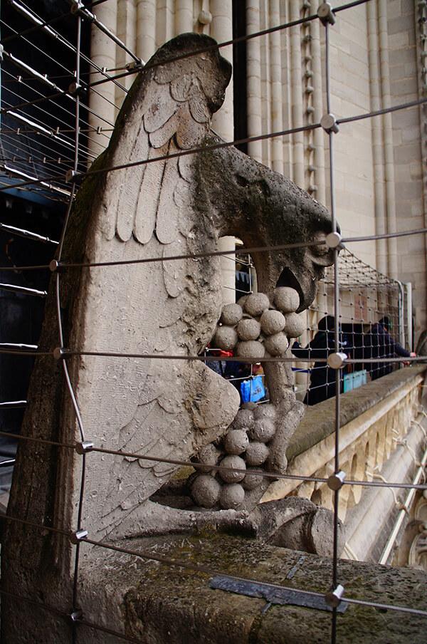 鷹嘴怪獸,只有他有果子可以吃