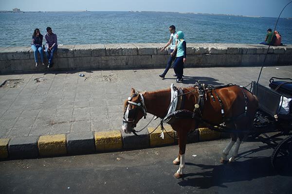 台灣沒有的海邊馬車體驗。