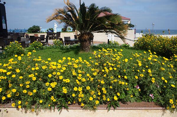 飯店花圃後面就是海景!