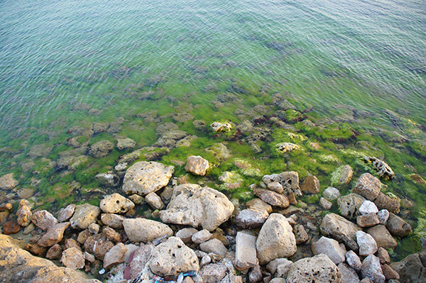 近看海邊的石頭,與海水,好綠好清澈!