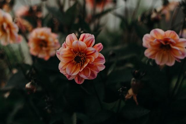 細膩的書中文字,令我感動不已,心花朵朵開。