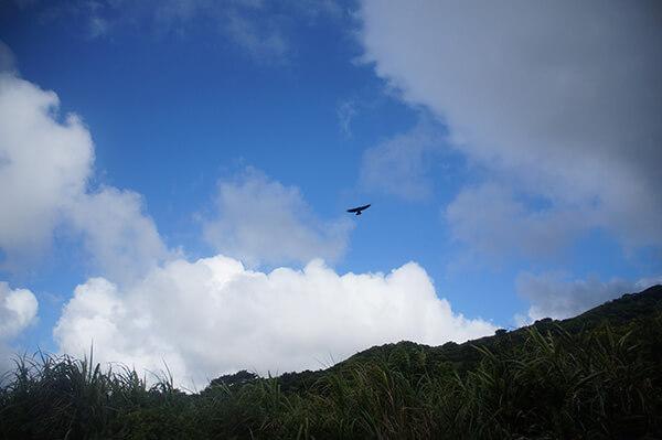 天上的大鳥,是老鷹嗎?很不確定。