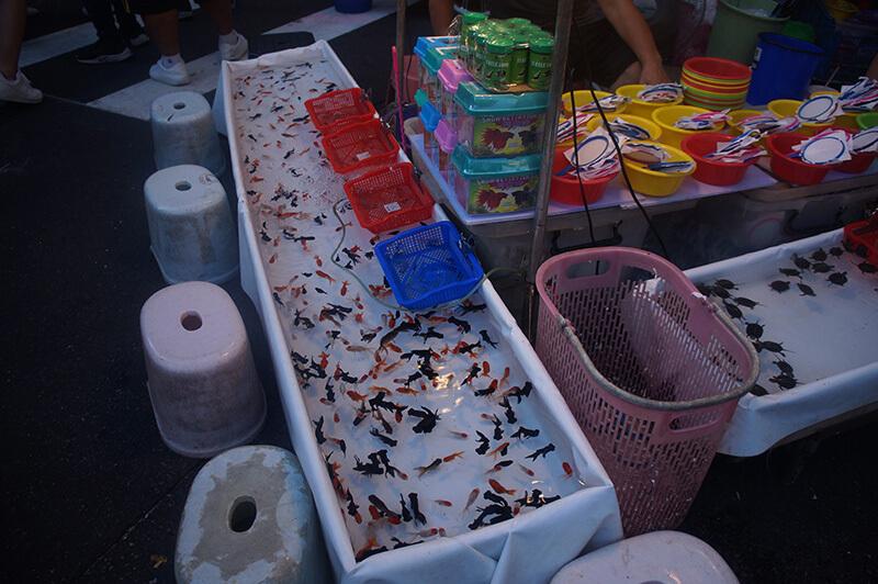 廟口撈魚,有小金魚跟小烏龜!