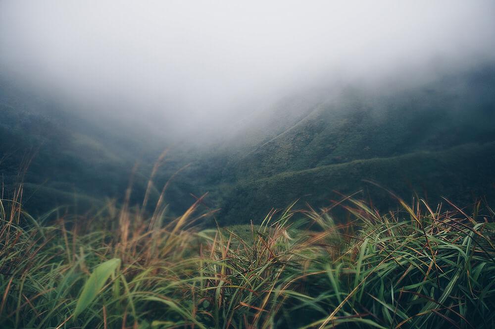 儘管如此,他們依舊十分珍貴!已經是我們最貼近看到抹茶山的樣子了XDD