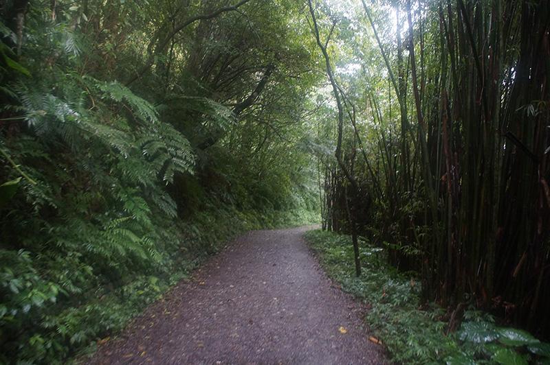 抹茶山步道前半部4K的緩坡,滿好走的!