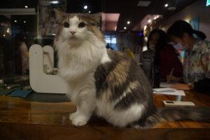 台北肉球森林貓咖啡