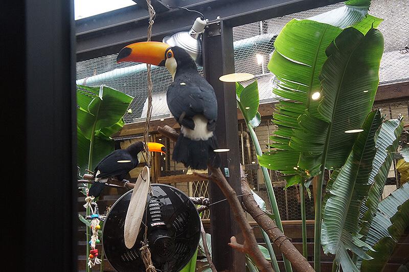 肉球森林可愛的大嘴鳥!