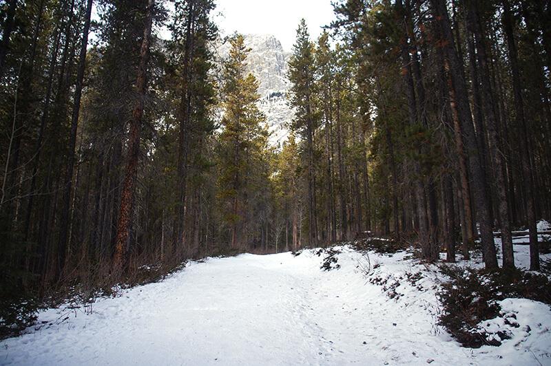 雪中森林漫步!
