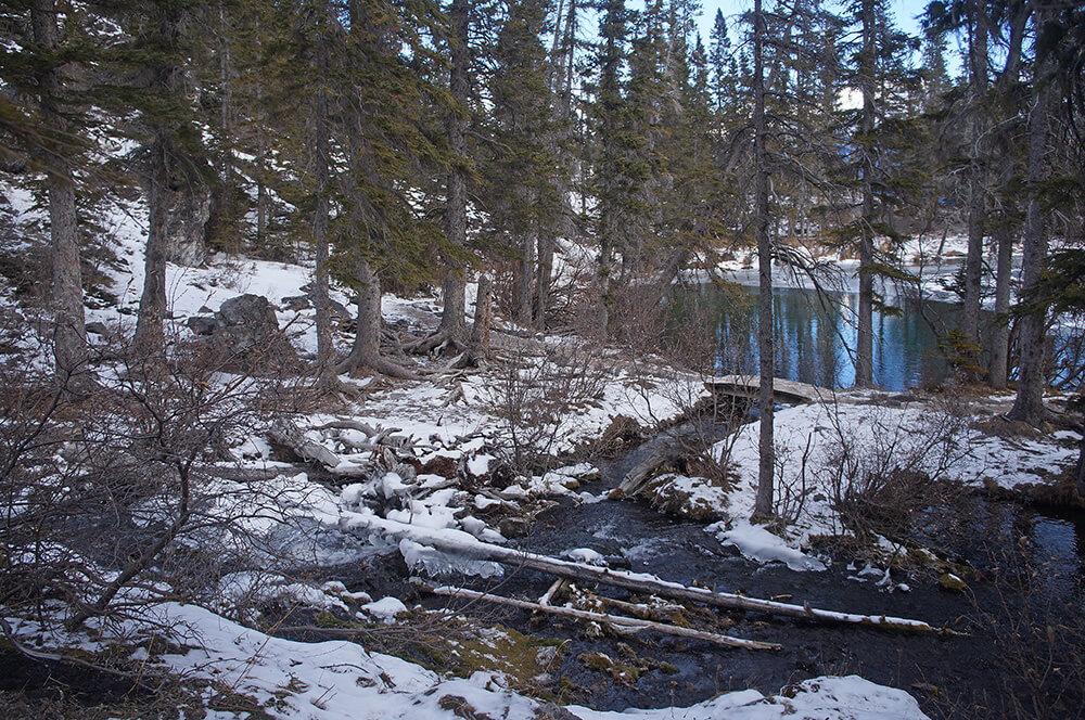 Grassi Lakes 森林探險
