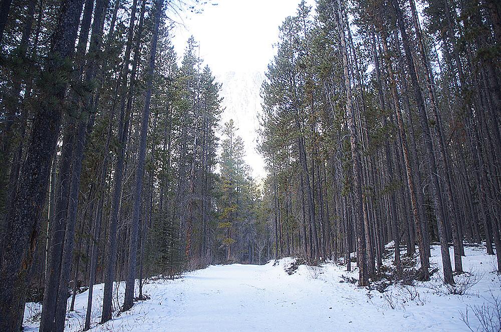 每次看就覺得好美,走在雪地森林中,其實心情很好!