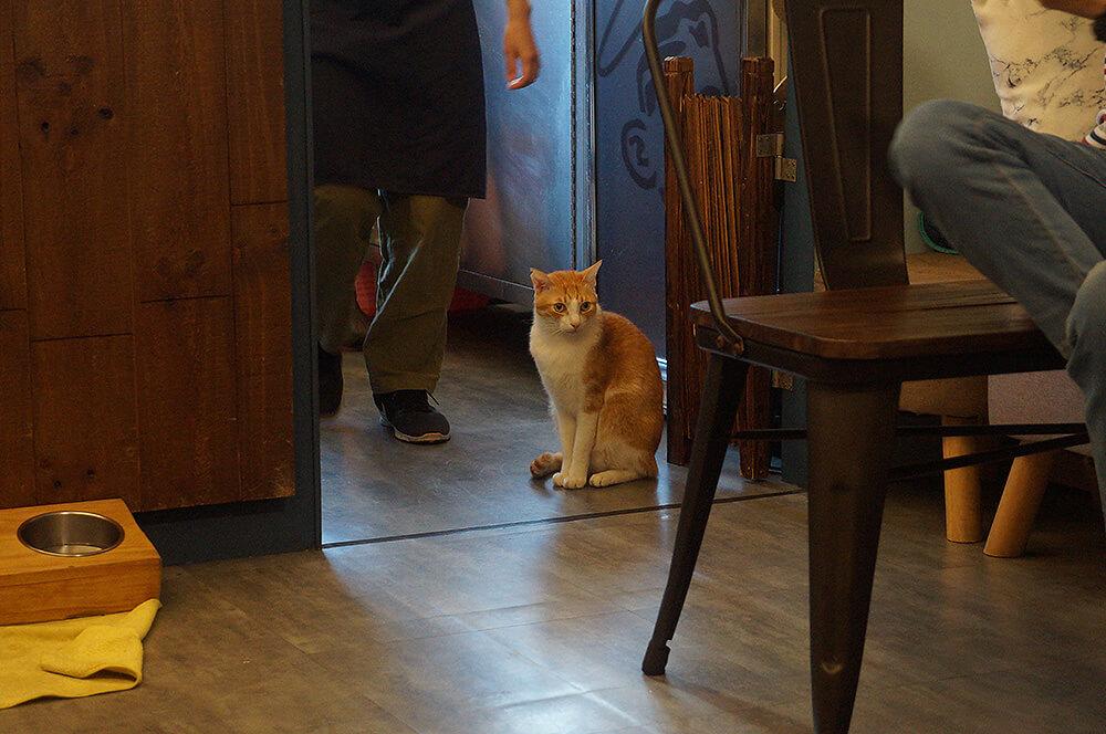 很喜歡坐在廚房的迪迪。坐姿很優雅耶!