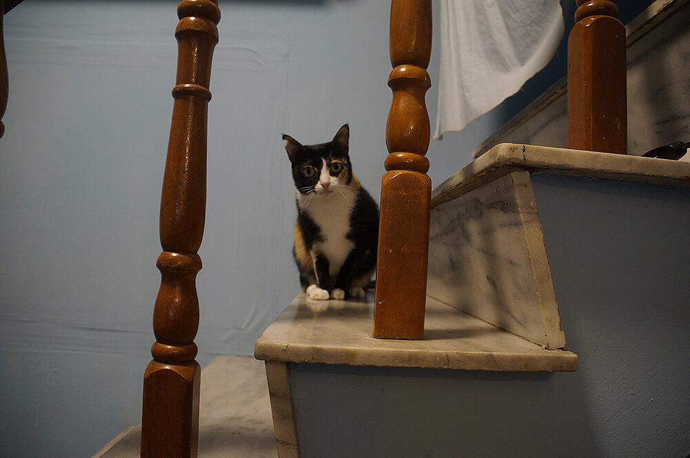 正在下樓觀望中的小花貓。