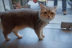 一臉疑惑的貓