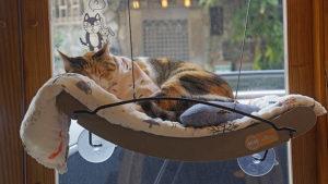 台北不限時貓咖啡推薦