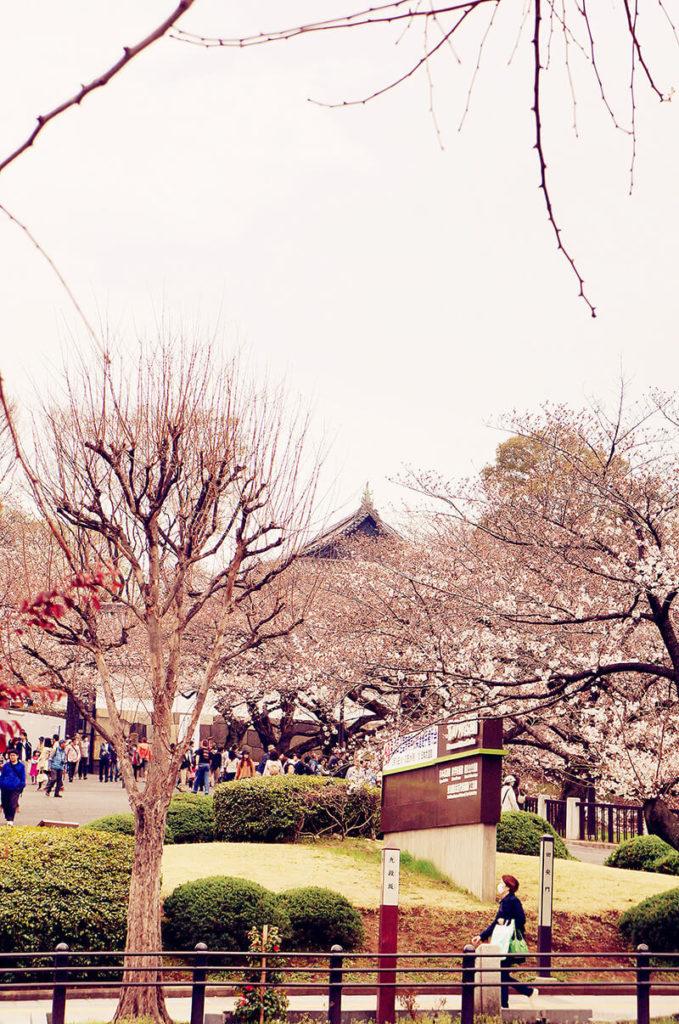 武道館/北之丸公園 前方櫻花。