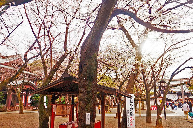 地圖上滿滿櫻花的地方到囉!這邊超好拍!