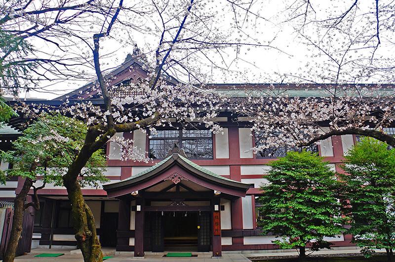 靖國神社櫻花初開~粉嫩白櫻點點,宛若停在半空的雪。