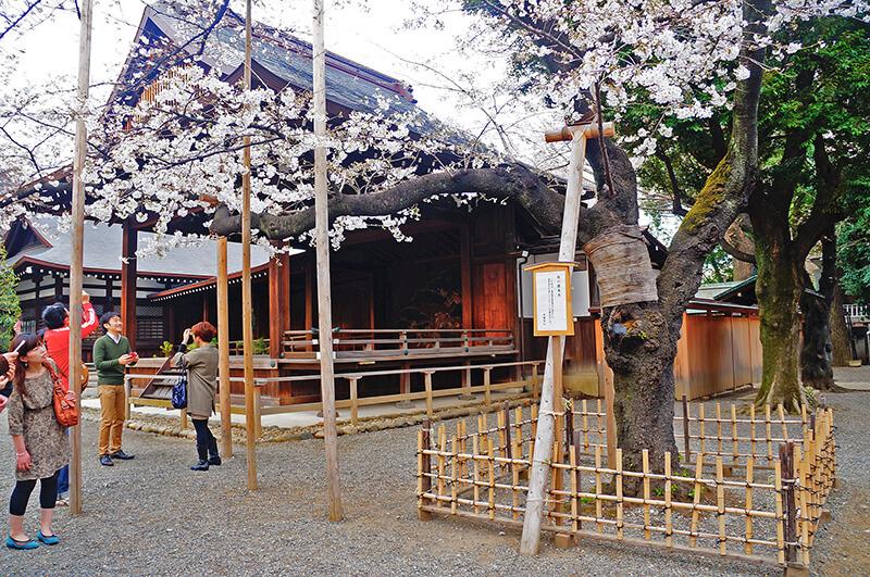 尖尖屋簷跟櫻花相襯一起拍