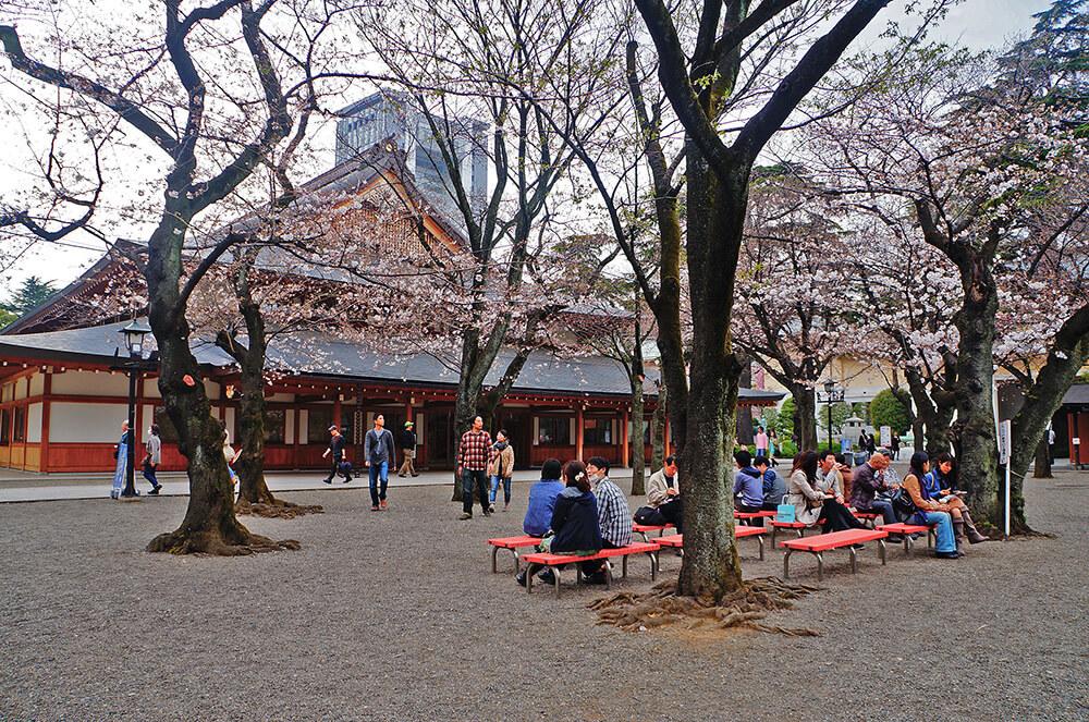 櫻花樹下小紅椅。