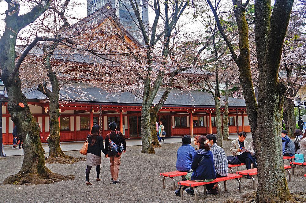 美麗的櫻花中庭