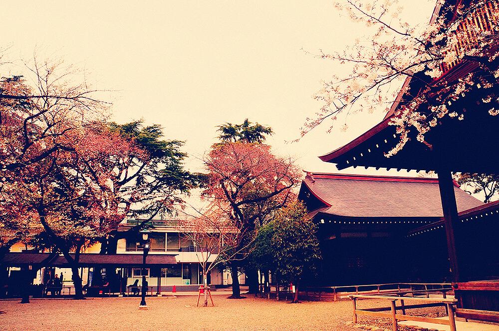 東京粉粉的櫻。