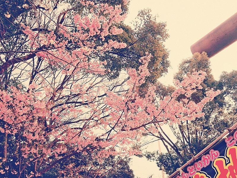 櫻花與慶典旗幟。