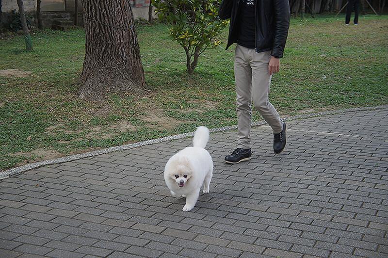 可愛的狗狗跟他的主人的腳。