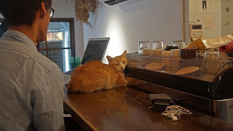 貓圖咖啡貓吧台寶座,他最愛的位子!