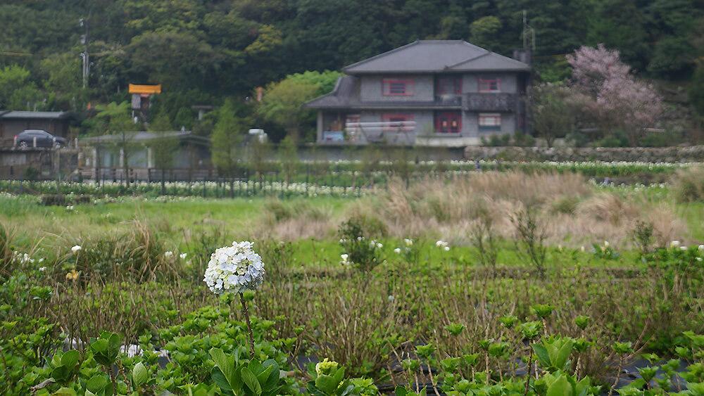 陽明山竹子湖風景,喜歡什麼就追逐什麼吧!持續輸入與輸出,正能量循環,生生不熄。