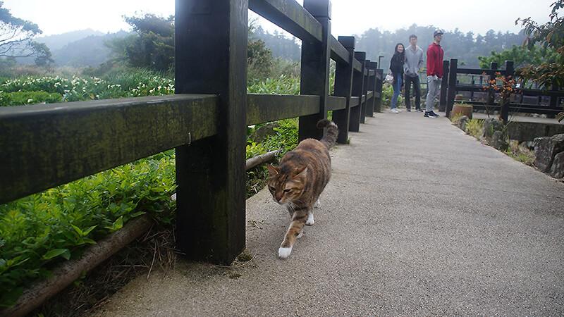 竹子湖遇到的酷貓咪!
