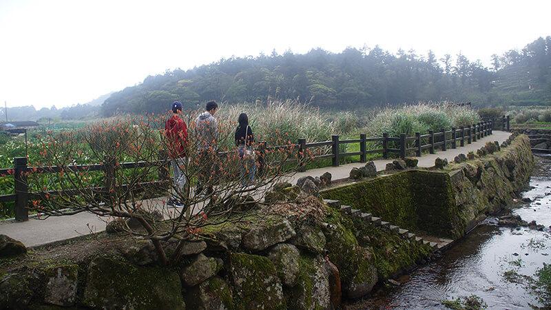竹子湖頂湖步道的浪漫~