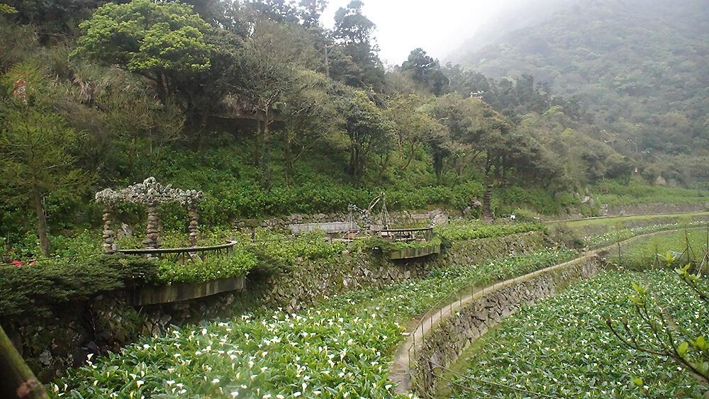 頂湖步道上,從外面拍攝的名陽匍海芋園。