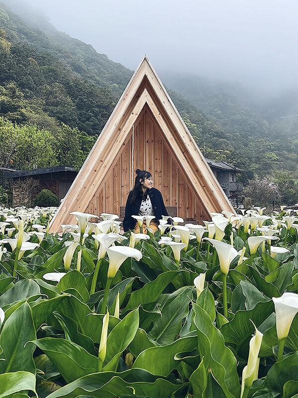 竹子湖海芋季,超精彩開心的一天