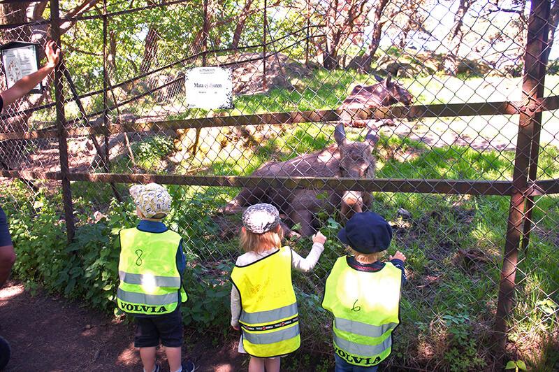 巧遇瑞典幼稚園小朋友校外教學,這是城堡公園中的免費動物園唷!