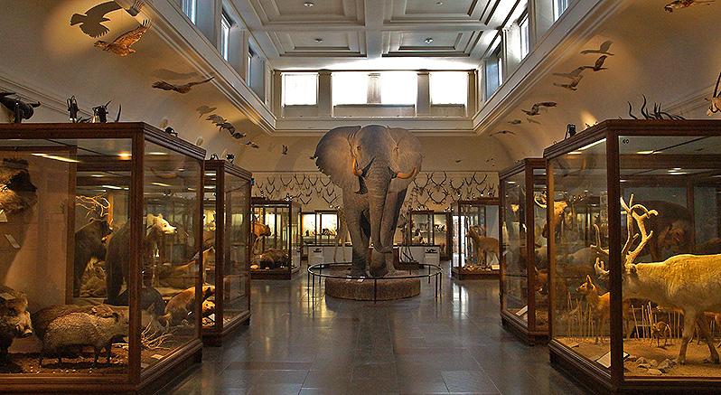 可以免費參觀,內容超級豐富的自然歷史博物館。