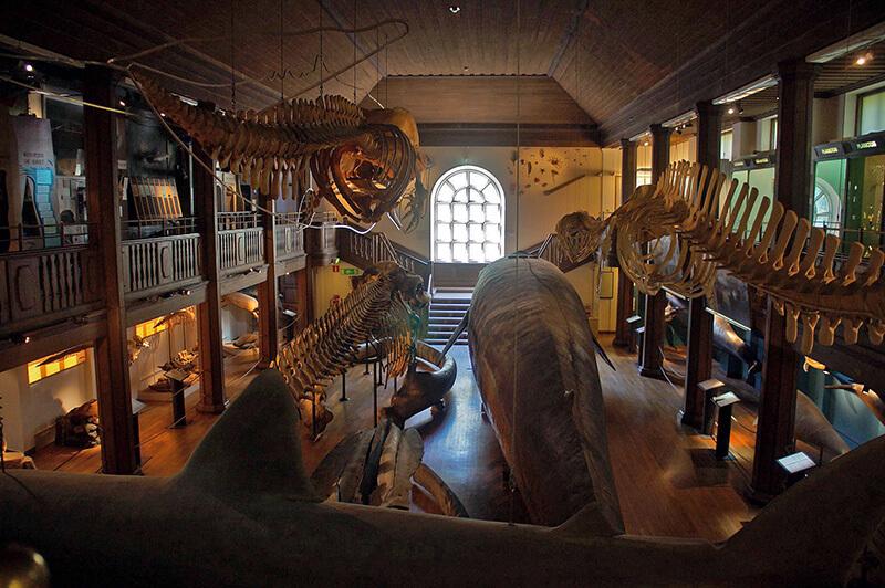 自然歷史博物館的鯨魚骨骼標本展間!