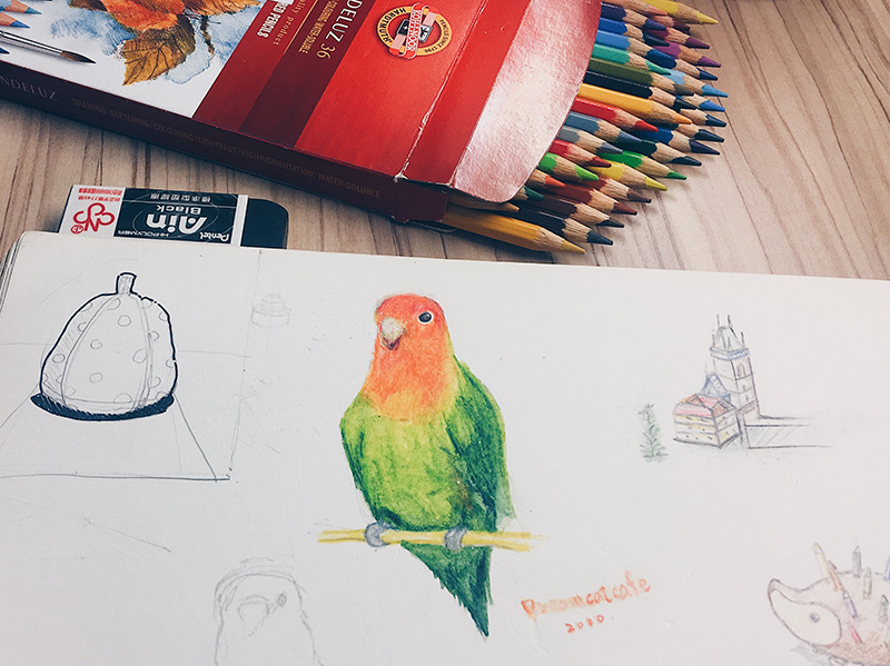watercolorpencil bird 捷克帶回來的水彩色鉛筆紀念品與唯一一隻著色鸚鵡。